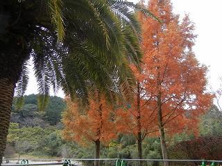 ヤシの木と紅葉