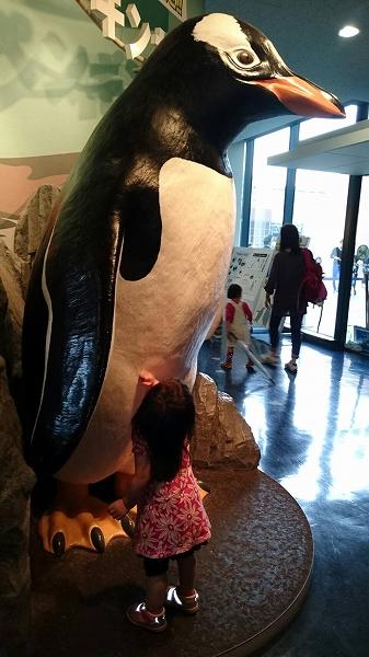 水族館とあんちゃん